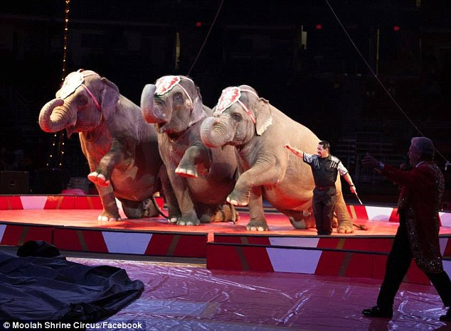 A circus official said the three elephants got away from their enclosure, went under a garage door and then walked around the parking lot damaging two campers and two pick-up trucks belonging to circus employees