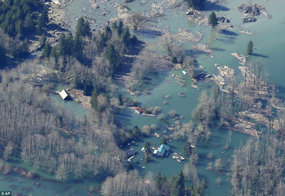 Hit like a bulldozer: Houses and other structures are shown flooded by the backed-up Stillaguamish River up-river from the massive mudslide that killed at least 24 people on Saturday and left dozens missing