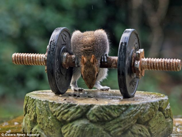 Ready to go: The creature looks as though he is willing himself to pick the dumbbell up