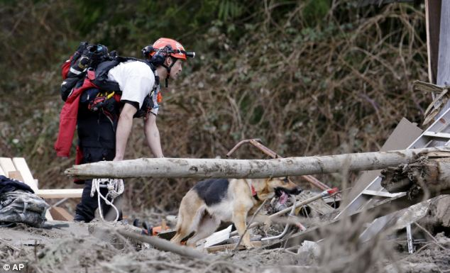 Holding out hope: Searcher Shayne Barco and his dog Stratus look through debris on Tuesday