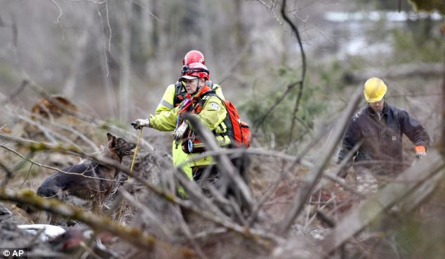 No giving up: Searchers work with a dog as they look through debris at the scene on Wednesday