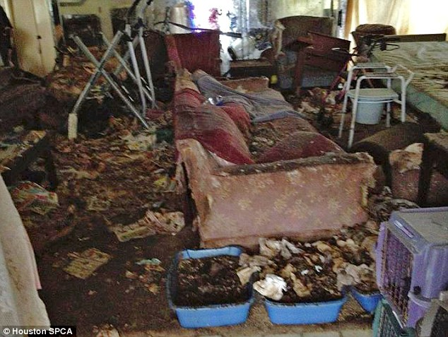 Distressing: Overflowing litter trays, piles of paper, and debris cover the sitting room