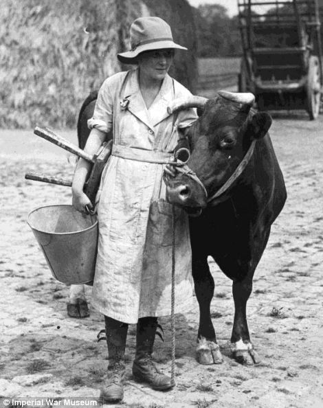 A woman pupil at the Cheshire Agricultural College at Holmes Chapel being taught how to handle cattle during a course on all aspects of animal husbandry