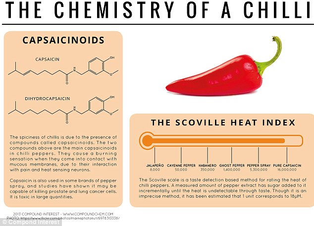 Feeling hot: The spiciness of chilli is due to the presence of compounds called capsaicinoids, which cause a burning sensation when they come into contact with mucous membranes