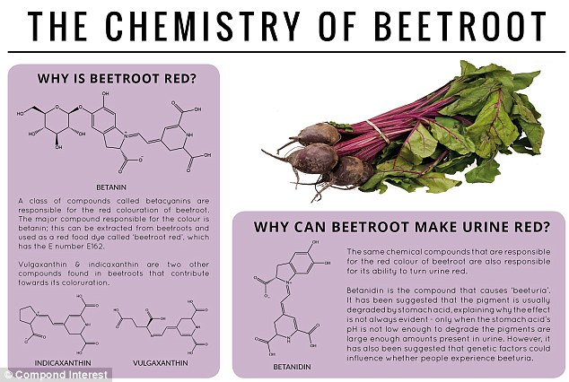 Red, not purple: A family of chemical compounds is the reason why people's urine can look red after eating beetroot. Betanidin has been identified as the chemical compound responsible for 'beeturia'