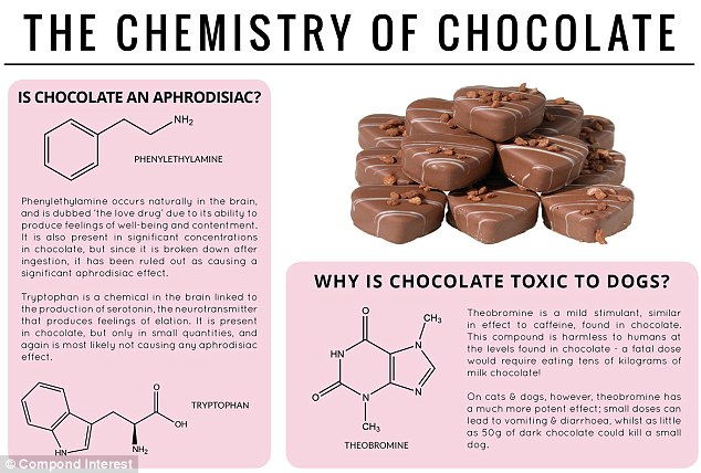 In the mood: Phenylethylamine is called the 'love drug' and occurs in the brain - as well as in chocolate. It is known to cause feelings of contentment but as the compound is broken down after it is eaten, scientists believe it doesn't have an aphrodisiac effect