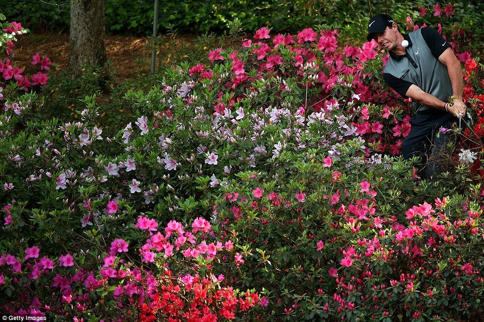 Rory McIlroy hits a shot out of the azalea bushes behind the 13th green during the second round of the 2014 Masters Tournament at Augusta National Golf Club