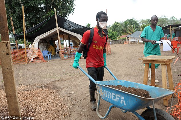 A worker transports dirt in a wheelbarrow at a centre for victims of the Ebola virus in Guekedou