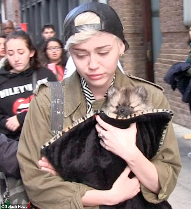 Tough month: Miley, shown in New York City earlier this month with puppy Moonie, also has been coping with the recent death of her beloved dog Floyd