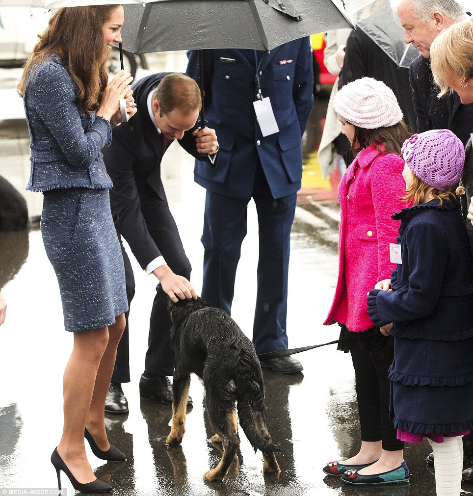 Wet dog: William gave a police dog who'd got caught in the downpour a gentle scratch