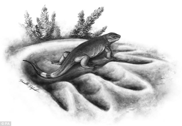 The University of Toronto released this artist's impression of the tiny mammal ancestor eocasea in the footprint of its much larger herbivorous descendent Cotylorhynchus
