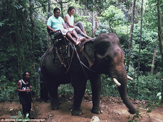 Wobbly ride: Campbell and a guide balance atop another elephant as it takes them along a jungle path