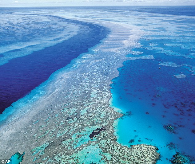 Aerial view: Almost half of the coral lost in the 1,500-mile stretch along the Queensland coast in the past few decades has been caused by the starfish, which are seen as one of the reef's biggest threats