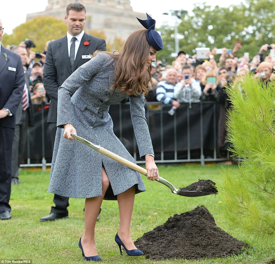 Green fingered: The Duchess used a shovel to help plant an Aleppo Pine sapling derived from seeds gathered after the battle of Lone Pine
