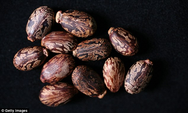 Easy to obtain: Ricin is made from castor beans