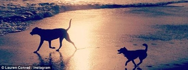 Sunset walkies: On the same day she added this moody shot with the message, 'My sandy pups'
