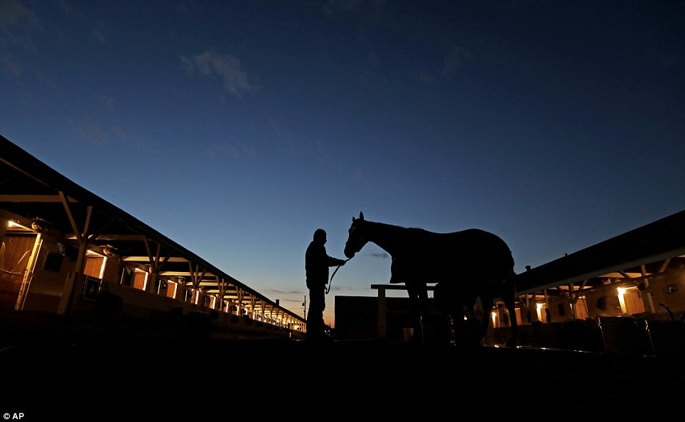 Time for a rest: A horse gets a bath after a morning workout at Churchill Downs in Louisville, Kentucky