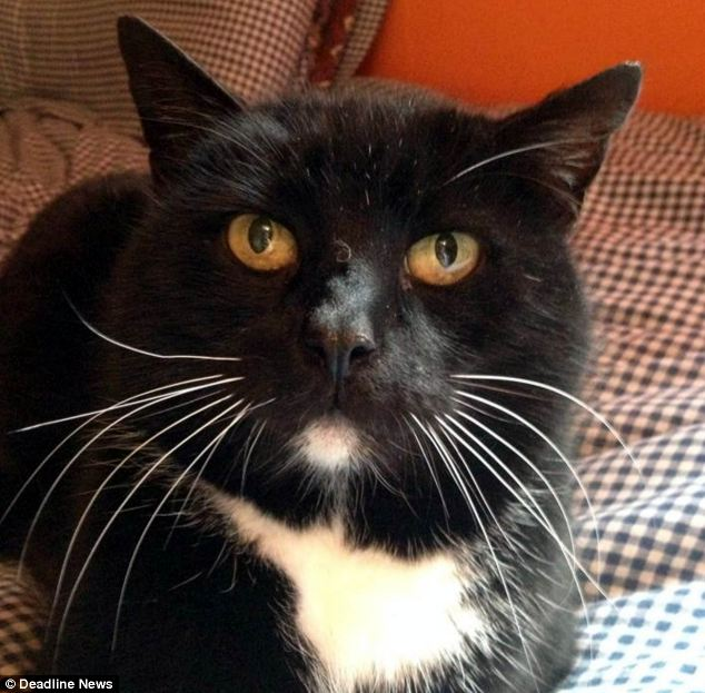 Thomas the cat returned to his Dalkeith home in February after eight years on the run. But after getting itchy feet again this week, the black and white cat lashed out at owner Elizabeth Shaw, biting her 10 times