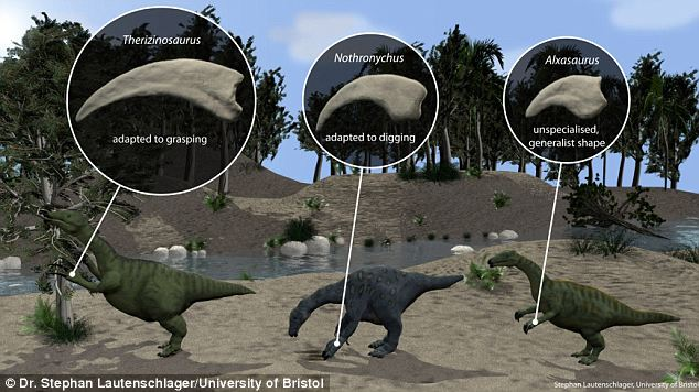 A study from the University of Bristol has revealed that during their transition from carnivores to herbivores, therapod dinosaurs developed a large variety of claw shapes adapted to specific functions such as digging, grasping or piercing. This illustration shows the different shapes in the therizinosaur group of theropods