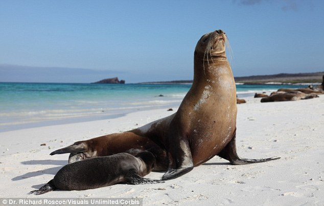 South American highlight: The Galapagos Islands, that inspired Charles Darwin, also inspire British holidaymakers