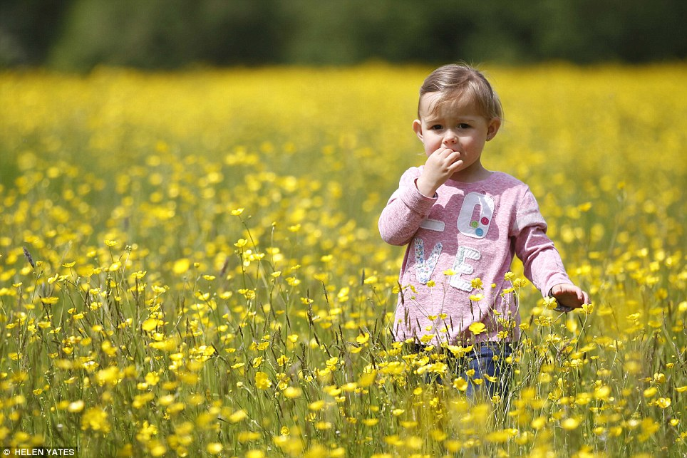 Cute: Two-year-old Amelia plays in a field of buttercups near Buriton in Hampshire this morning as temperatures increased across the country. Parts of the South may reach 25C on Saturday