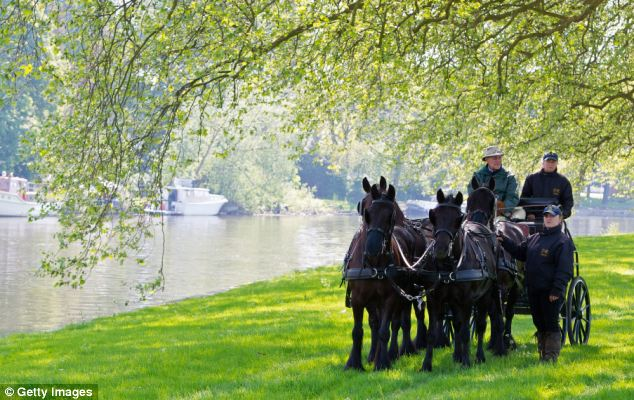 Riding high: The Prince was seen driving around Windsor Great Park last week