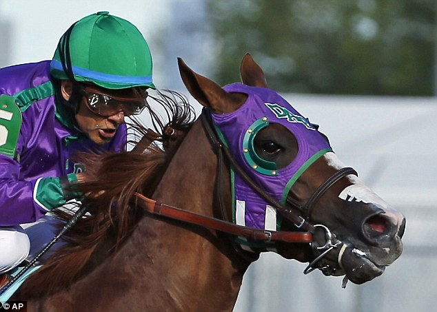 Jockey Victor Espinoza rides California Chrome to win the 140th running of the Kentucky Derby earlier this month with the horse's nasal strip visible. The New York Racing Association ruled today the strips can be used at Belmont Stakes