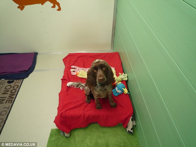 Pupular hotel: A pet pooch chilling out at Hayfields Luxury Dog Hotel