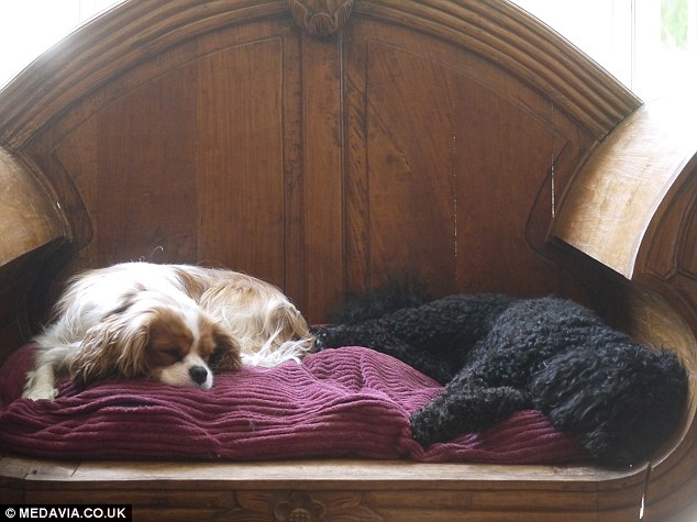 Ruff night?: Dogs relax on a cushioned chair at the Paw Seaons Hotel