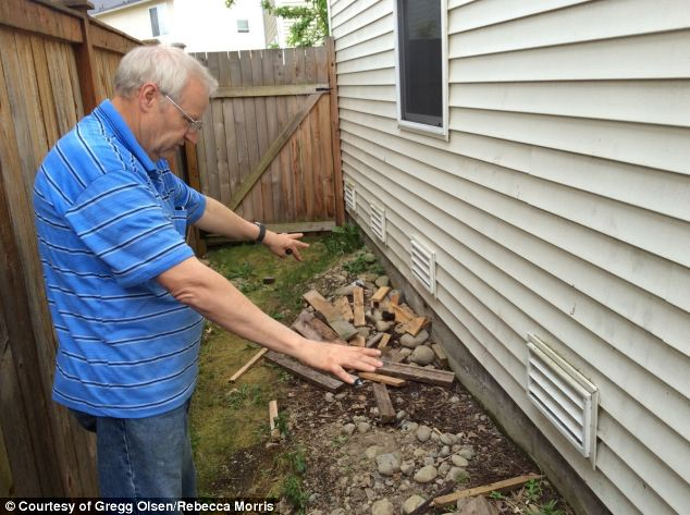 Hope: Chuck Cox, the father of missing mother Susan Powell, shows the side of the house of Steven Powell, which they are searching with the permission of the new owners