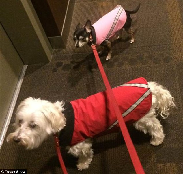 Dynamic duo: Tamron Hall's current dogs Oscar and May Luv pose in matching coats for a Today Show image