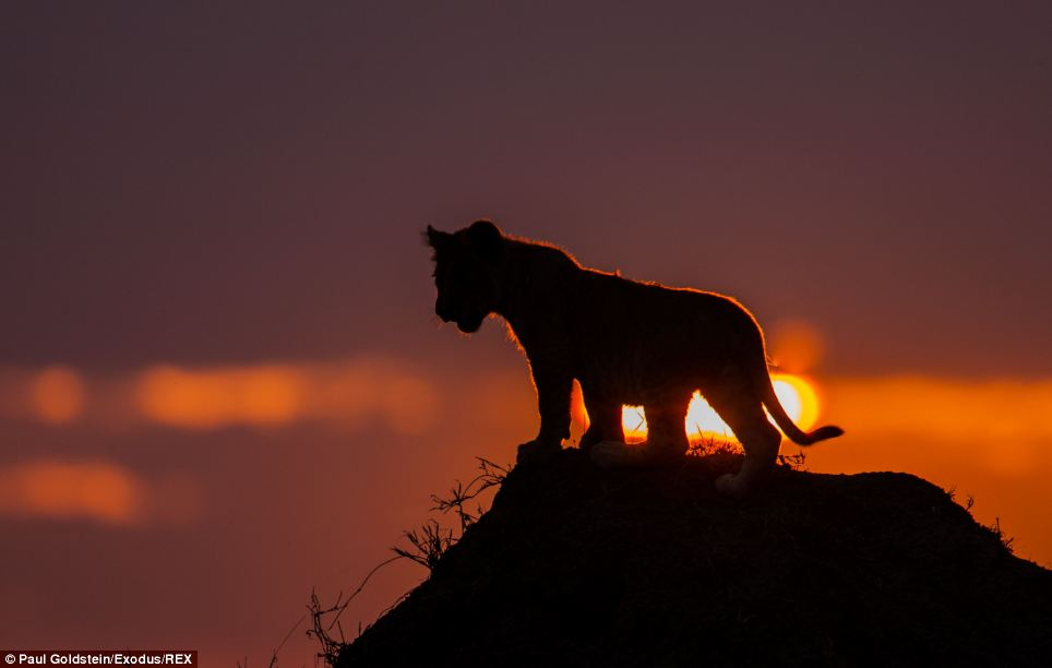 'The Masai Mara is well-known for having the best photographic light in the world, but these well-managed conservancies also have the best spots for sunrise and sunset and without crowds of people,' he said
