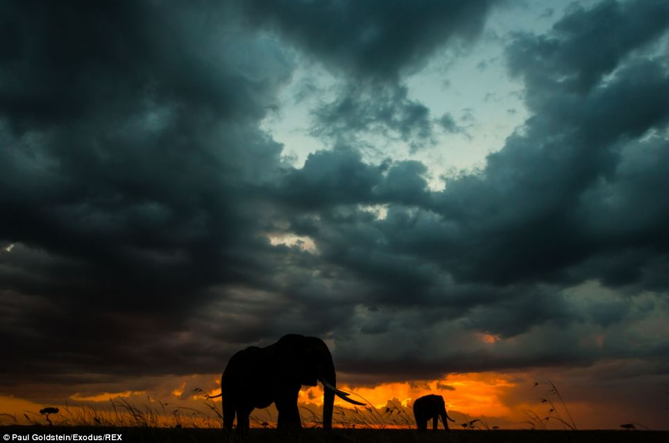And now thanks to his role as a travel guide, there have been countless opportunities to document the beautiful natural spectacle