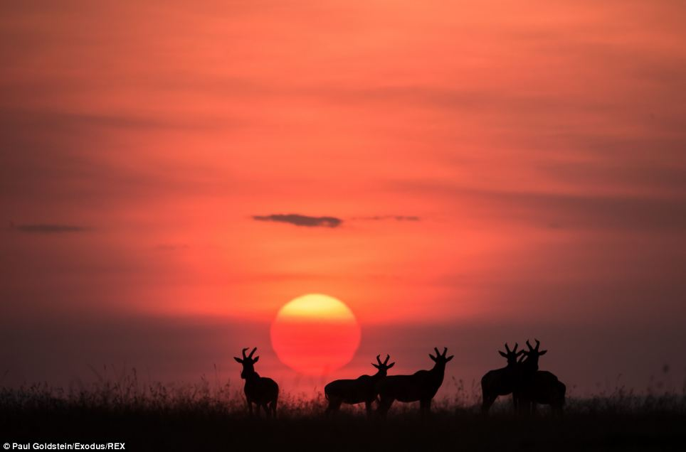 The Masai Mara is Kenya's best known wildlife zone, a 1530-square-kilometre expanse of grassland, savannah and scrub in the south-west of the east African country