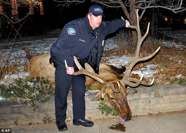 Ex-cop Sam Carter was sentenced to 200 hours of community service and probation for illegally killing the beloved elk Big Boy