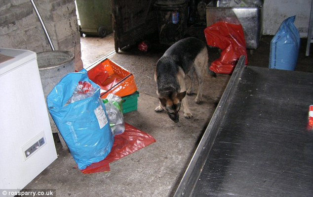 Squalid: Health officials found bags strewn all over the floor as rat traps were discovered above work surfaces