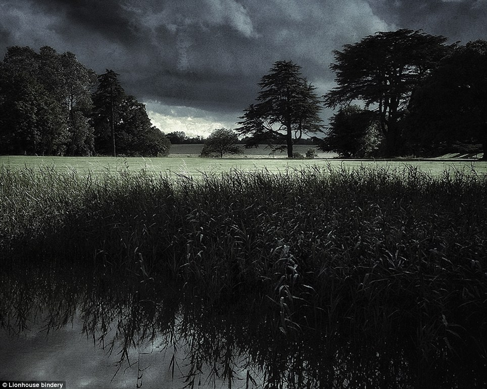Dark: This images captures plants on the banks of a lake in Chichley Hall in Buckinghamshire. The image stretches to the tree-lined hills in the distance