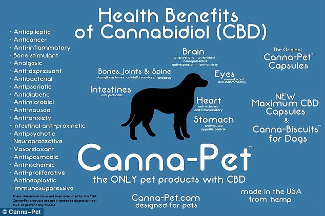 Benefits: Canna-Pet contains only traces of THC, the component that gets users 'high,' and more cannabidiol, the main medical component