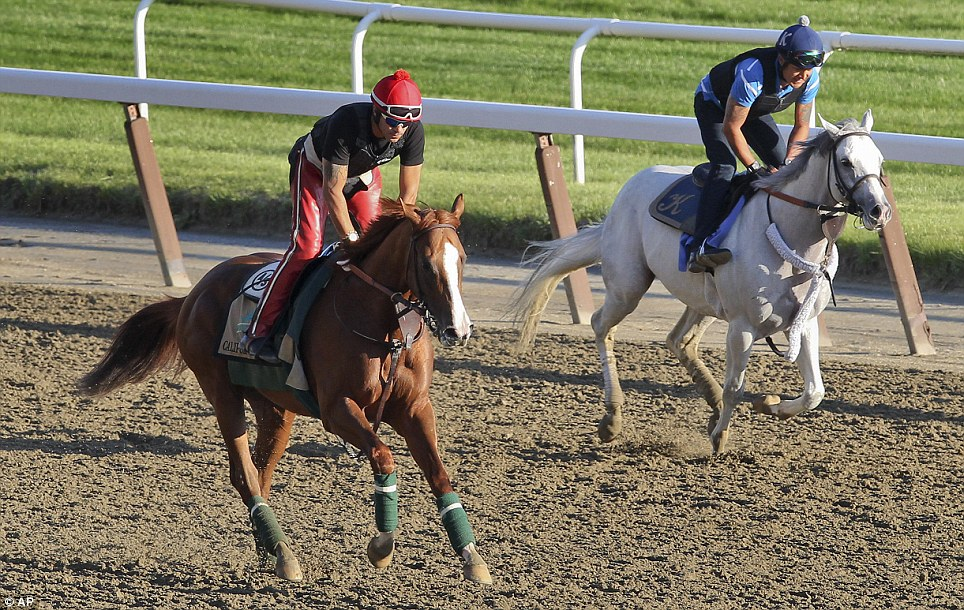 Fourth-place finish: California Chrome, seen left in a practice session, lost his chance to win the Triple Crown on Saturday when he tied for fourth place at the Belmont