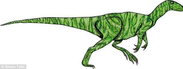Each dinosaur, such as this Hypsilophodon, took between six and eight hours to draw using Adobe Illustrator and are based on the most up-to-date thinking about how dinosaurs looked - particularly the feathered ones