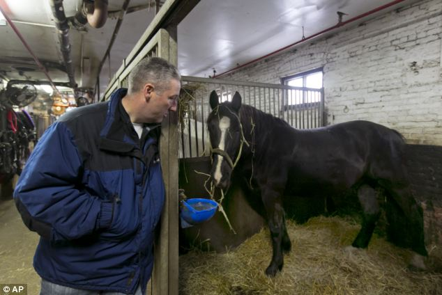 Carriage horse owner Stephen Malone looks in on his horse Tucker in his stall at New York's Clinton Stables. Malone  that there were no injuries to the horse or any people when a startled carriage horse took a jaunt around New York's Central Park