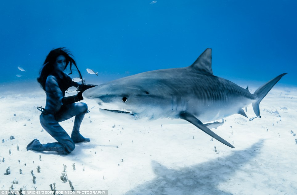 At peace: Hannah got up close and personal with several sharks in the shoal and had to stay constantly moving so that they did not mistake her for dinner or bit her by accident