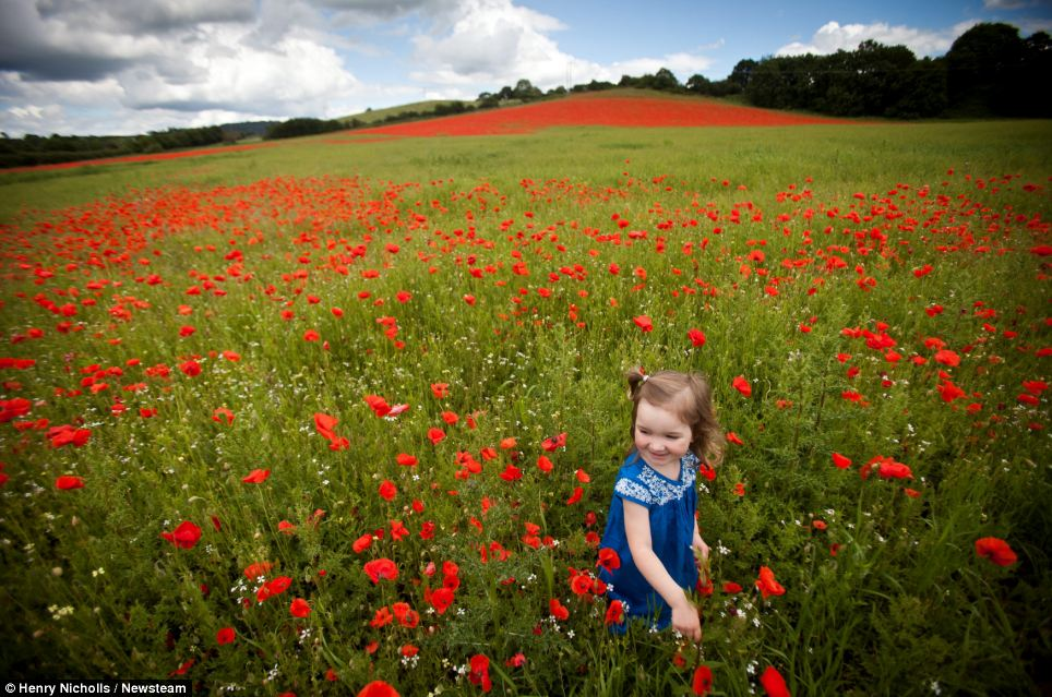 Catherine McNabb, two, plays among the poppies at Blackstone Farm Fields Nature Reserve near Bewdley, Worcestershire. The fine spell of weather will come as a welcome relief to people caught in the fierce thunderstorms last weekend