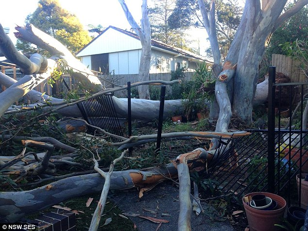 The NSW SES said the Illawarra South Coast were hardest hit by the wild weather