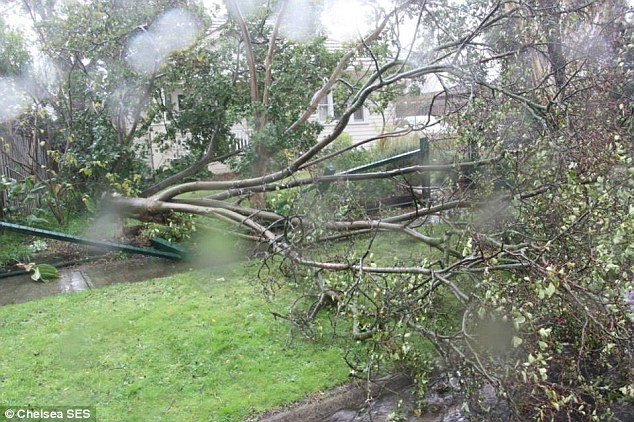 Trees were uprooted by the gale-force winds and SES in Victoria still have hundreds of calls to attend to