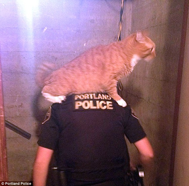 I've got your back!: The cat decided to help a Portland police officer look for clues by getting a better view of the evidence