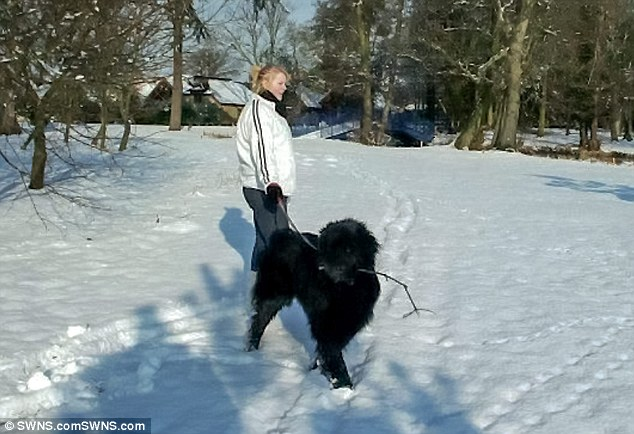 Collect photo of Shadow the dog with owner Gemma Ballantyne. See SWNS story SWDOG; A family are devastated after their ëperfectí dog died after a vet botched a routine CASTRATION. Shadow, a six-year-old Newfoundland, went under the knife after being diagnosed with a benign tumour in his testicles. But the vet failed to properly secure the incision and the poor pet died from internal bleeding just two hours after being sent home. Heartbroken owner Gemma Ballantyne, 22, is now demanding answers from the Companion Care practice inside the Pets at Home store in Slough, Berks.