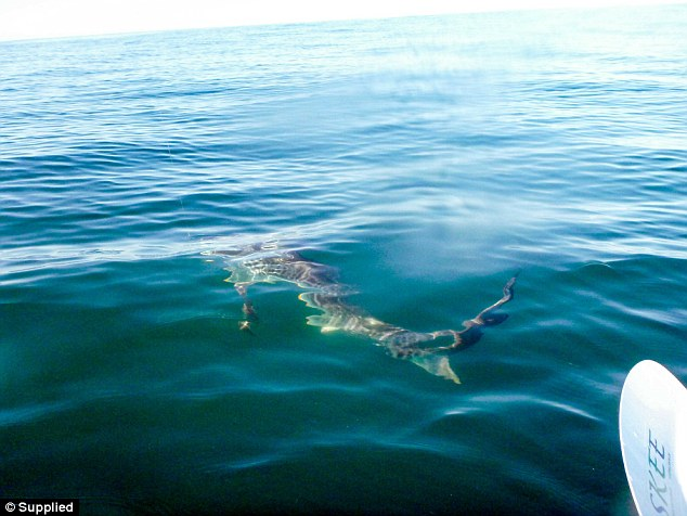The fisherman said he knew it was a shark from its long tail as soon as he snagged it on his line