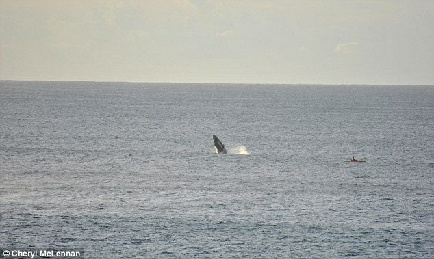 The majestic marine animal then swam off in to the sea once its performance was over