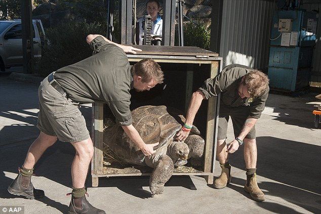 Named Hugo, the 63-year-old tortoise  was found to be in good health and put on one-kilogram since last year